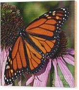 Monarch On Purple Coneflower Wood Print