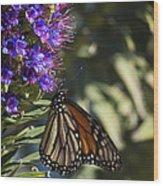 Monarch On Purple Flower Wood Print