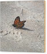 Monarch On The Beach Wood Print