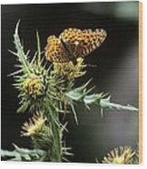 Monarch On Thistle Wood Print