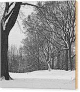 Monarch Park - 324 Wood Print
