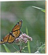 Monarch Perch Wood Print