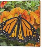 Monarch Resting Wood Print