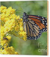 Monarch Resting Wood Print