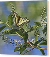 Monarch Tranquility Wood Print