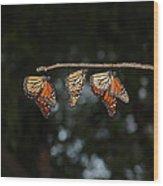 Monarch Trio Wood Print