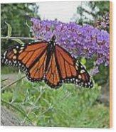 Monarch Under Flowers Wood Print