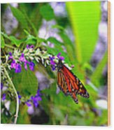 Monarch With Sweet Nectar Wood Print