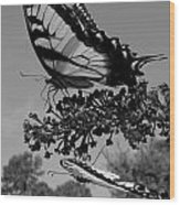 Swallotail In Black And White Wood Print