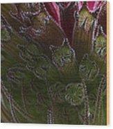 Monarda Wood Print