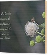 Monday Motivation - Bee On Buttonbush Wood Print