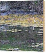 Monetish Egret Wood Print