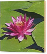 Monet's Waterlily Wood Print