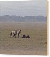 Mongolia Horses Wood Print