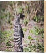 Mongoose Standing. Safari In Serengeti Wood Print