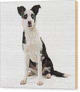 Mongrel Dog, Border Collie Cross Wood Print