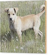 Mongrel Dog Puppy Wood Print