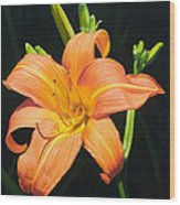 Monikas Orange Lily Wood Print