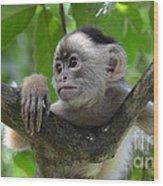 Monkey Business Wood Print by Bob Christopher