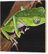 Monkey Frog Wood Print by Liudmila Di