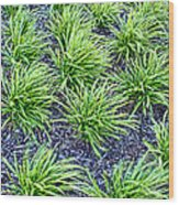 Monkey Grass Abstract Wood Print