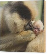 Monkey Mother Wood Print