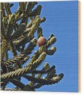 Monkey Puzzle Tree A Wood Print