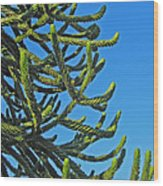 Monkey Puzzle Tree Wood Print