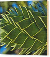 Monkey Puzzle Tree D Wood Print