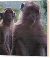 Monkey's Attention Wood Print