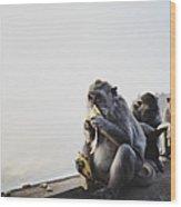 Monkeys Eating Bananas Wood Print