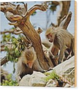 Monkeys On Mountain Wood Print