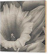 Mono Daffodil Wood Print