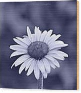 Monochrome Aster Wood Print