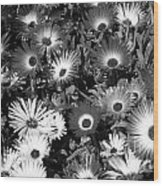 Monochrome Asters Wood Print
