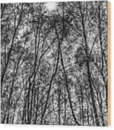 Monochrome Forest Wood Print
