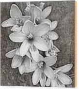 Monochrome Freesia Canvas Grunge Wood Print