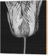 Monochrome Streaked Tulip Wood Print by Oscar Gutierrez
