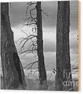 Monochrome Trees Wood Print