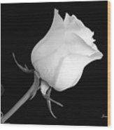 Monochrome White Rose Wood Print
