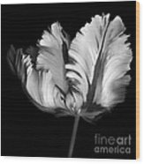Monocrhome Parrot Tulip Wood Print