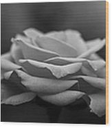 Monotone Rose Wood Print