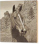 Montana Horse Portrait In Sepia Wood Print