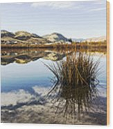 Montana Reflections Wood Print by Dana Moyer