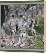 Montana Wolf Pack Wood Print