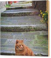 Montepulciano Cat Wood Print