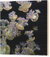 Monterey Aquarium Jellyfish Wood Print