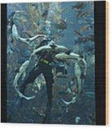 Monterey Bay Aquarium Diver Wood Print