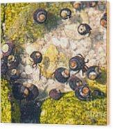 Monterey Bay Tide Pools Wood Print