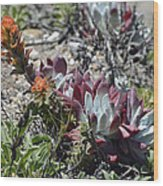 Monterey Indian Paintbrush And Ice Plant Wood Print by Bruce Gourley
